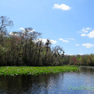 A ride on the Ocklawaha - at the first bend