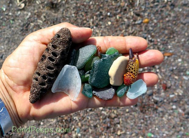 Beachcombing finds in Road Trip - Azores