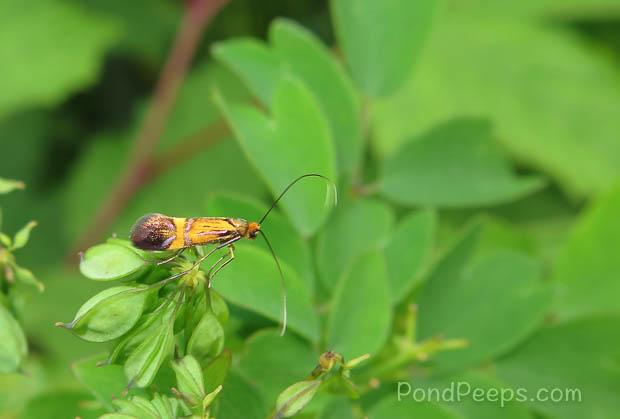 Bug at Joshinetsu Highland National Park