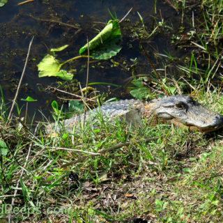 Pond Peeps – Yeah, We're Still Around