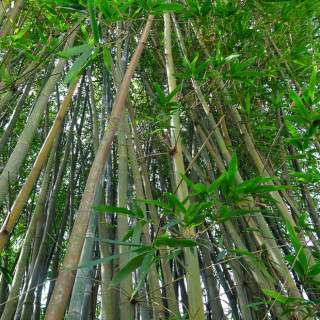 Life in the Bamboo