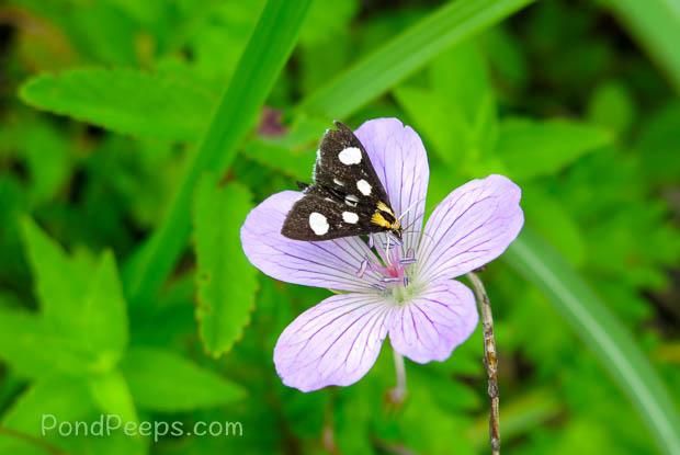 Lovely flower from Joshinetsu Highland National Park