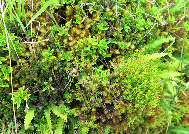 Mosses in Road Trip - Azores