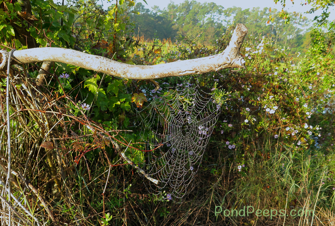 Spider web in the early morning dew at Earl Johnson Park