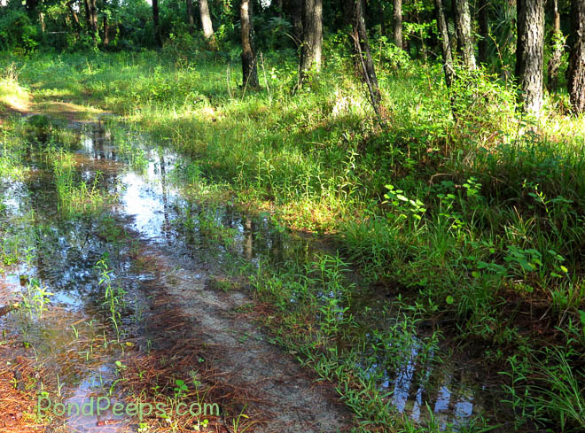 Vernal pool created by June rain at the St. Augustine Road Fish Management Area.