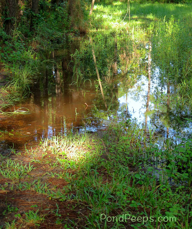The vernal pool comes and goes with the rains.