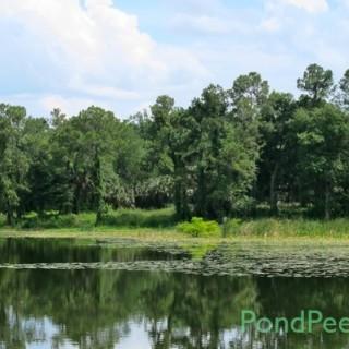 St. Augustine Road Fish Management Area